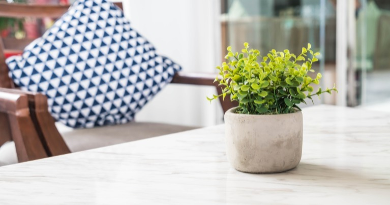 tipos de planta para cultivas em apartamento